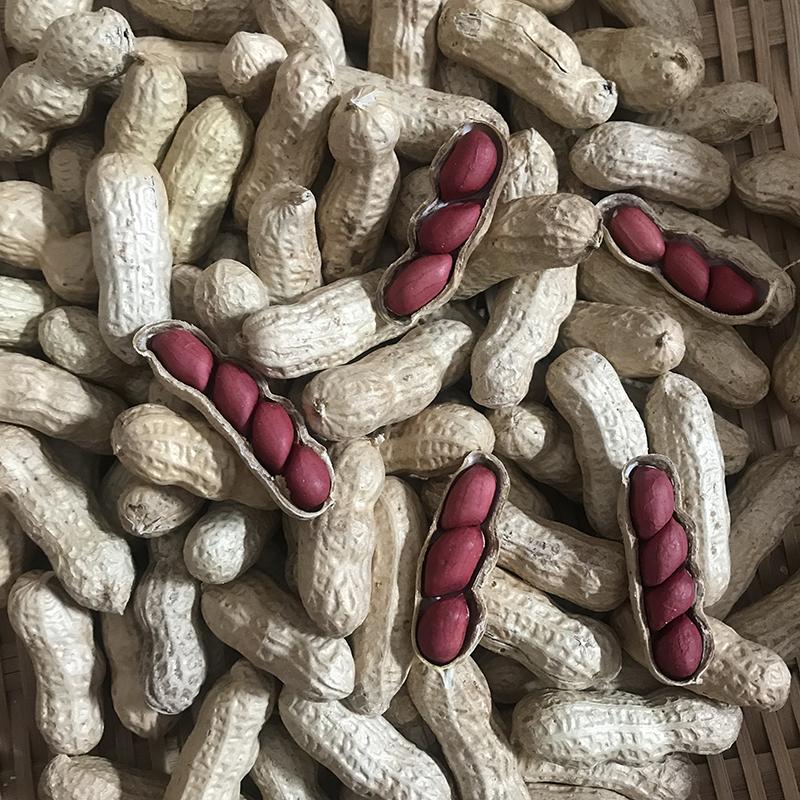 斤散裝 5 新曬干貨鮮農家小紅色花生紅衣帶殼 紅皮花生花生帶殼生