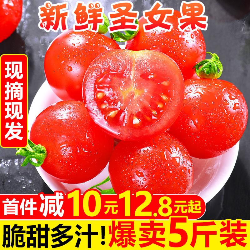 新鲜圣女果5斤 水果自然熟西红柿子千禧果生吃小番茄蔬菜整箱包邮