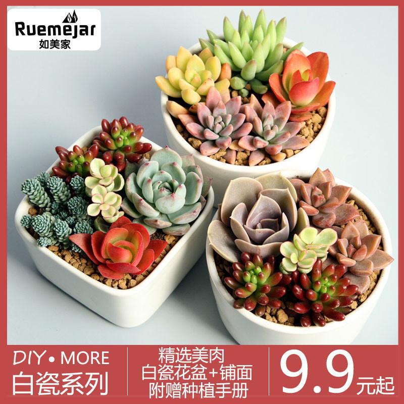 多肉观花植物新款组合盆栽肉肉绿植带含盆套餐多肉室内花花卉批发