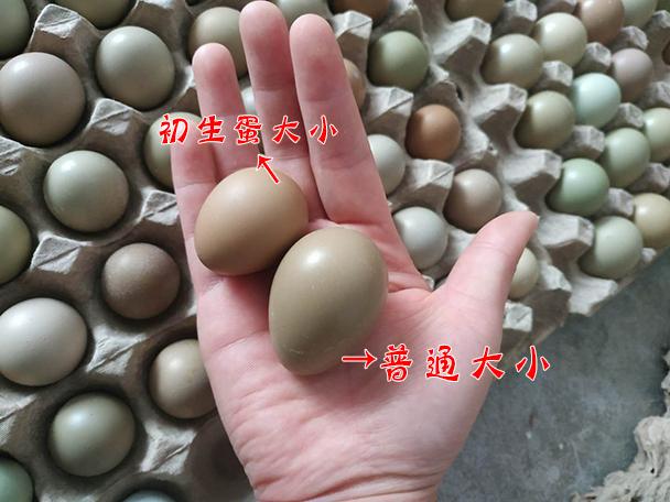 小初生野鸡蛋100枚 七彩野山鸡蛋新鲜 农家野外杂粮散养土鸡蛋