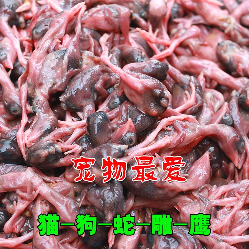 生骨肉 新鲜小鹌鹑现杀公鹌鹑幼仔嫩鹌鹑乳鹌鹑速冻食肉宠物饲料