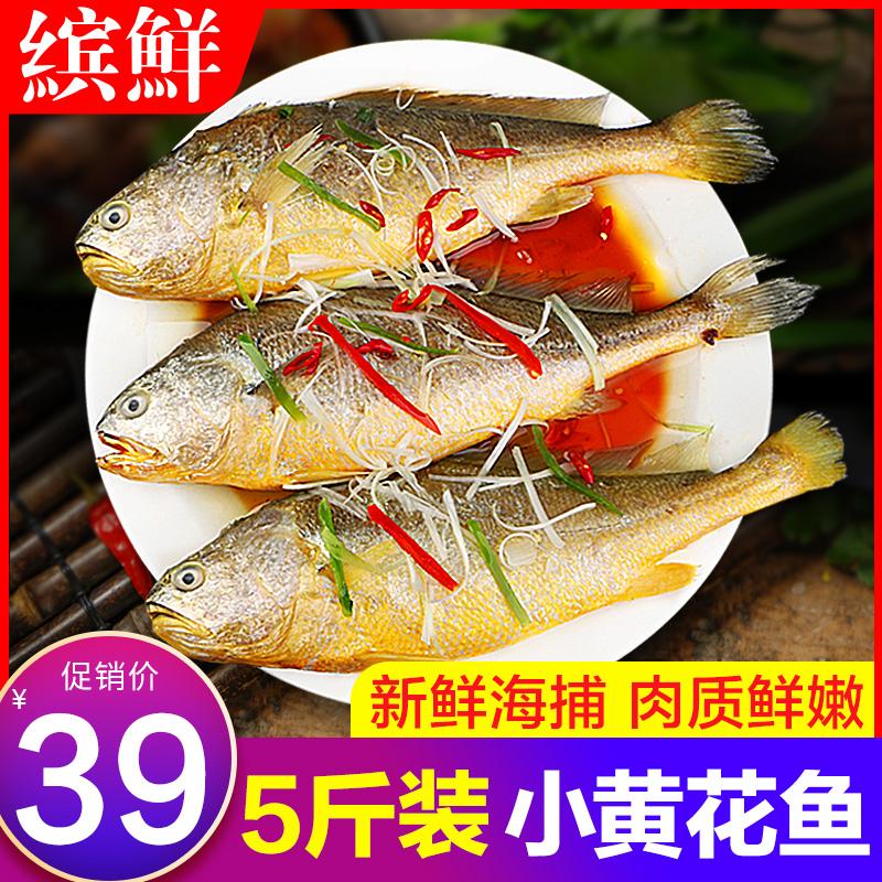 小黄鱼鲜冷冻黄花鱼新鲜小黄花鱼鲜活舟山海鲜水产生鲜海鱼整箱5