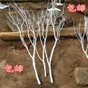 直销干树枝干枝白色树干许愿树橱窗枯树杆仿真婚庆树树枝装饰摆件 - 3