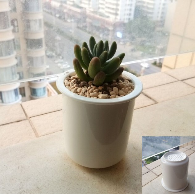 1元质量问题打折处理小圆杯茶杯款陶瓷多肉植特小花盆系列 景观盆