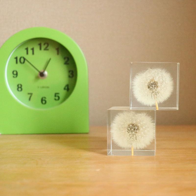 蒲公英立方体植物标本桌面摆件礼物水晶摆件儿童送男生女朋友创意