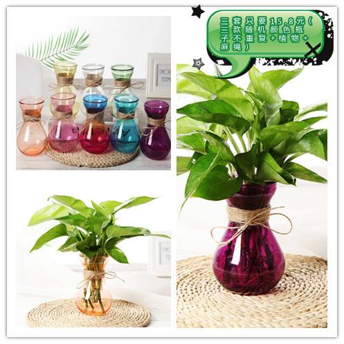 玻璃花瓶水培植物绿萝容器养花透明瓶子水生水养花卉风信子瓶子