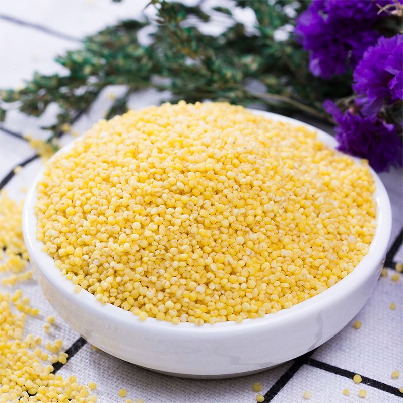十月稻田黄小米1kg红谷小米五谷杂粮粗粮月子米宝宝米黑米粥大米