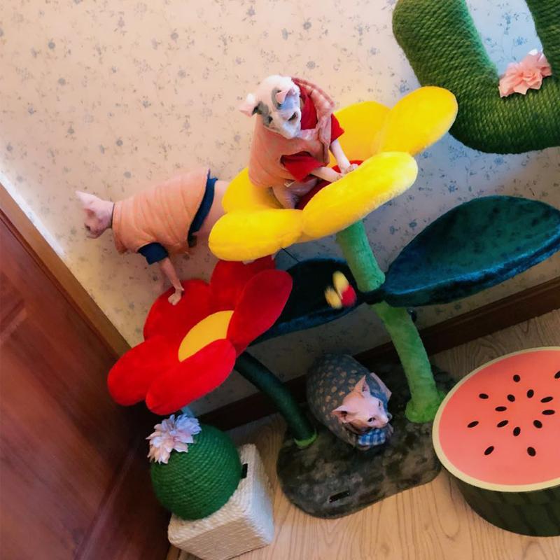 现货凯瑞彩色花朵猫爬架猫玩具猫跳台猫抓柱 向日葵爬架猫猫玩具