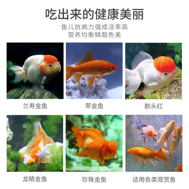 Goldfish feed small goldfish special fish food small fish household small particles fish Lanhou koi universal floating