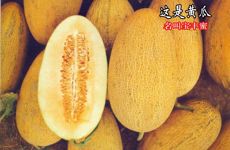 新疆特产2019年大南湖乡正宗哈密瓜干天然干果水果500g特价无添加