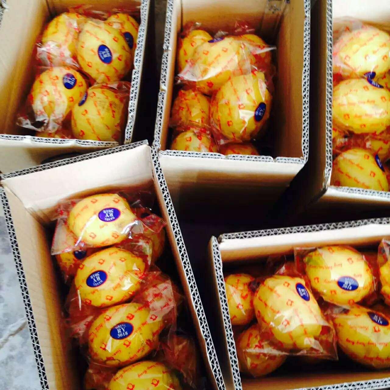新鲜四川安岳黄柠檬二三级水果当季特产榨汁切片有坏包赔5斤包邮