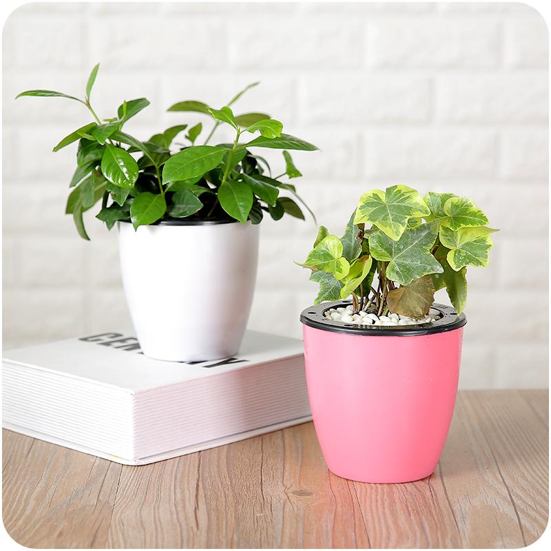 水培植物彩色塑料小花盆 绿植盆栽水土两用花盆 带定植篮自动吸水