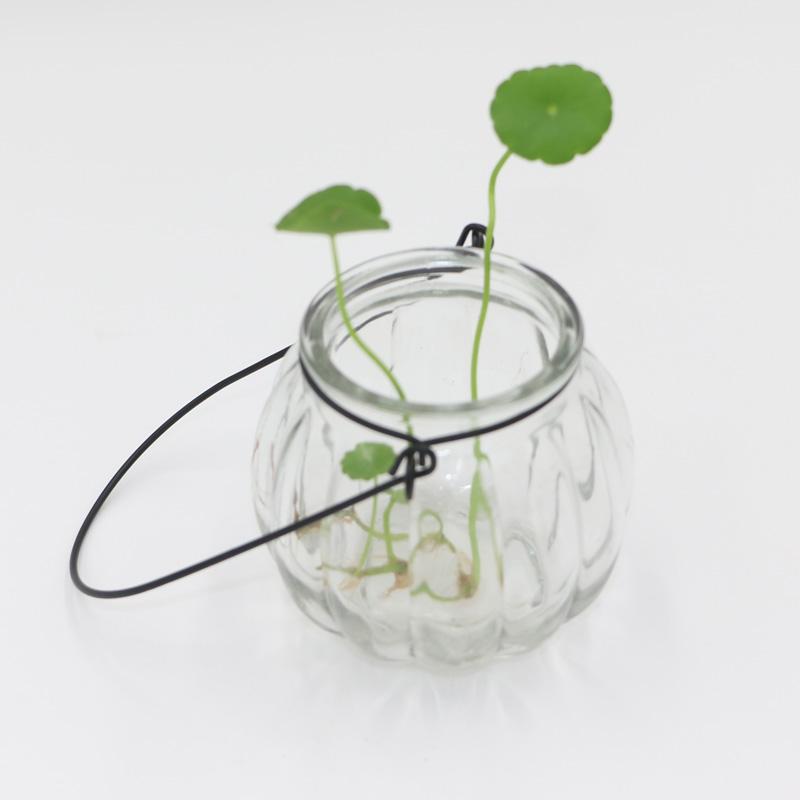 水生水培水养植物绿萝吊兰铜钱草透明玻璃花盆 垂吊悬挂南瓜花盆