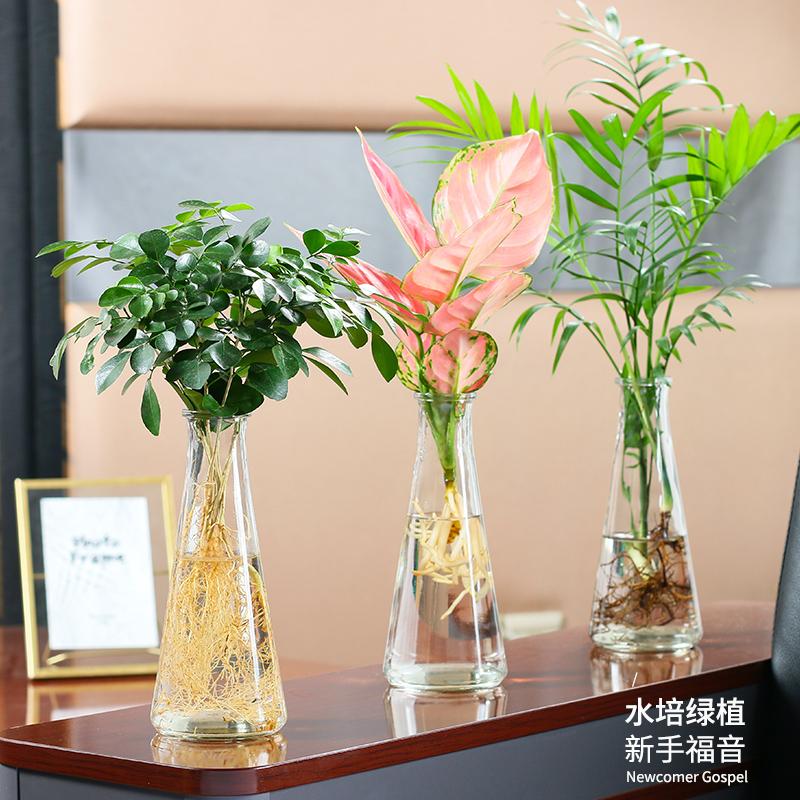 水培植物九里香富贵竹白掌如意椰子办公桌