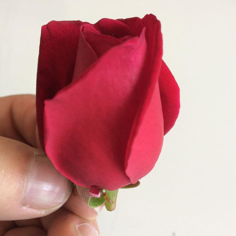 云南新鲜可食用玫瑰花苞花冠花蕾墨红玫瑰鲜花2000g包邮现摘现发