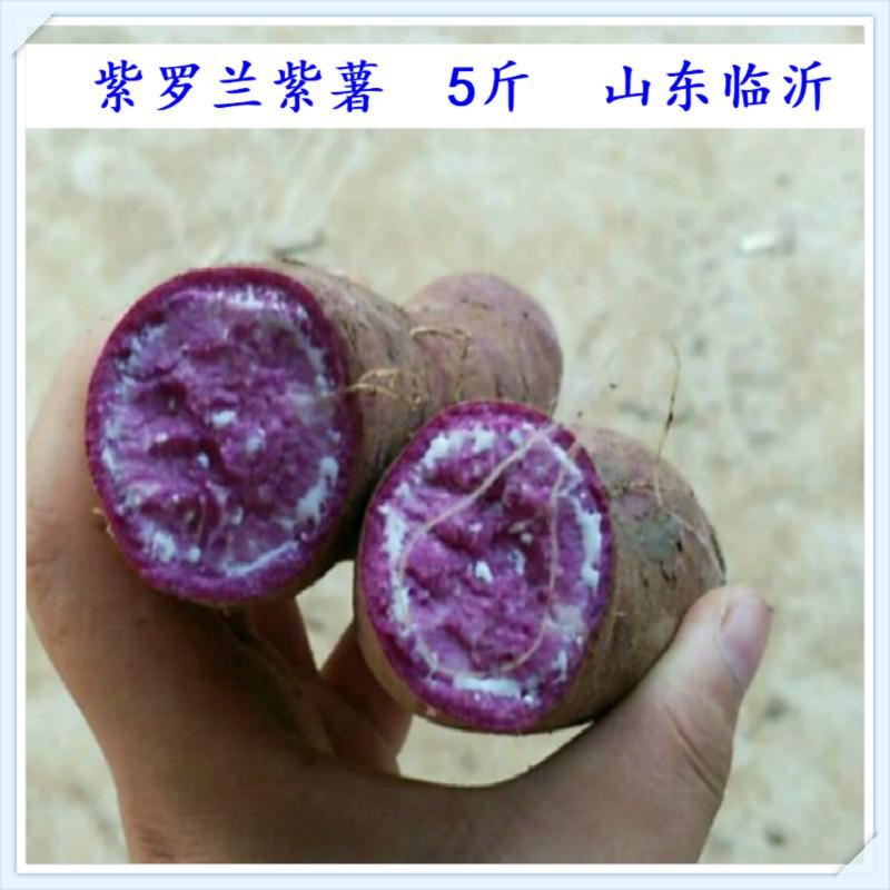 现挖发货蔬菜农家自种紫薯新鲜大果紫红薯地瓜紫罗兰山芋2500粗粮