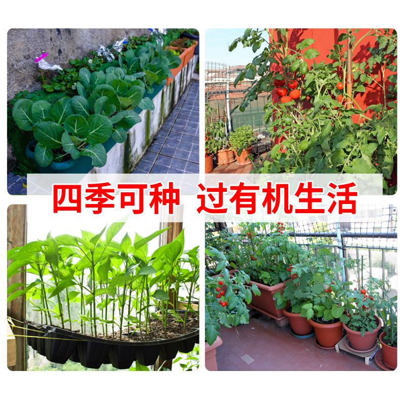 蔬菜种子青菜香葱芹菜洋葱小葱茼蒿辣椒香菜种籽韭菜胡罗卜蒲公英