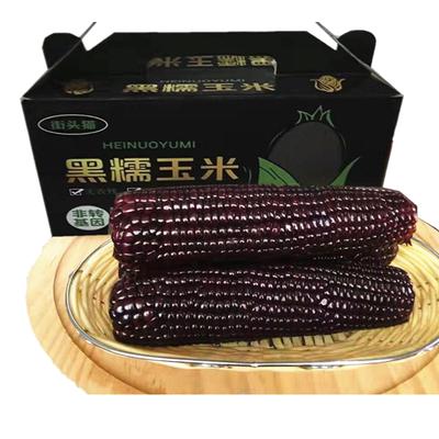 东北黑糯玉米真空包装微甜黏软香新鲜粘糯农家苞米棒220g10根包邮