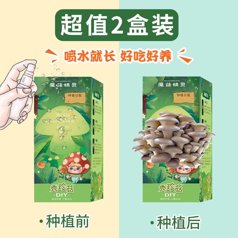 蘑菇种植包盒子魔菇精灵秀珍菇家庭室内儿童盆栽亲子DIY园艺2盒装