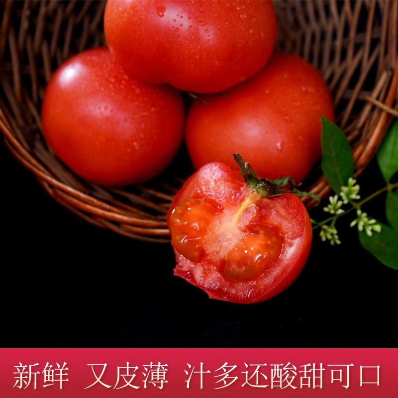 新鲜沙瓤西红柿自然熟柿子整箱农家当季现摘水果番茄生吃蔬菜包邮 - 图0