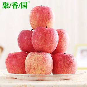 【顺丰包邮】聚香园山东红富士苹果