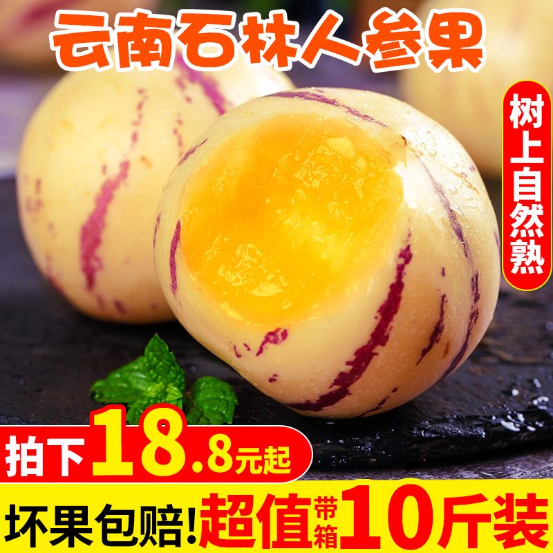 云南石林人参果10斤大果新鲜特级水果七彩黄肉人生果圆果身5包邮