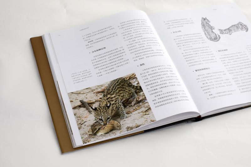 野生哺乳動物貓科動物品種大全圖鑒圖片書籍 貓科動物百科全書 極具吸引力 百科全書 推薦 cfca 貓盟 世界野生貓科動物 正版預售