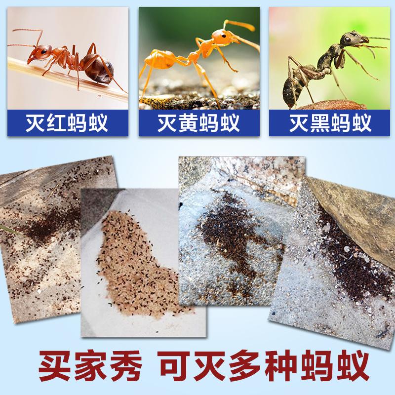 除杀强蚂蚁药粉家用室内外厨房一窝端无毒传染灭蚁清消灭蚂蚁神器