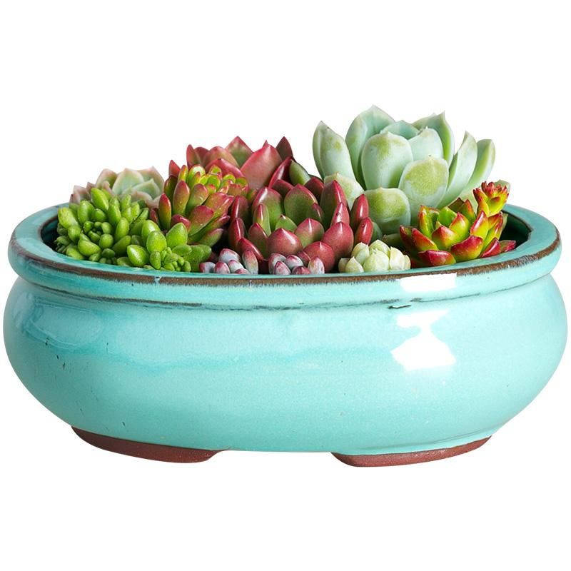 特大号多肉植物花盆器多肉花盆粗陶植物创意生石花大口径拼盘陶瓷