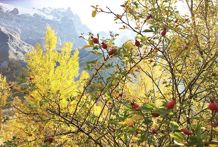 明树堂滋养版 玫瑰果深层补水保湿滋润面霜女天然保湿锁水秋冬