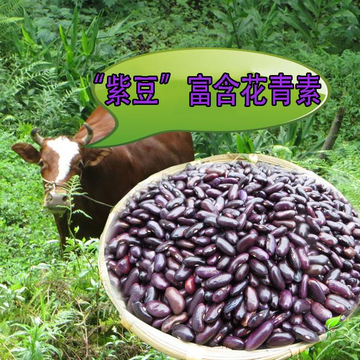 新货贵州土特产紫豆大红豆非红腰豆老品种紫豆农家自产山里农家货