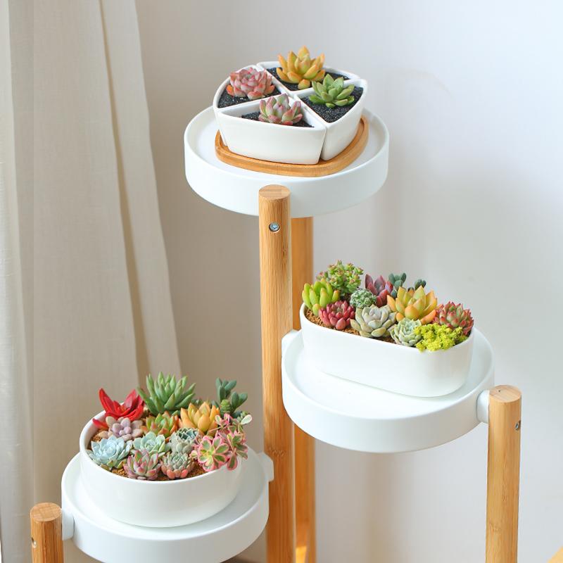 MMH多肉植物组合新手套餐肉肉多肉花植物含白瓷花盆花卉盆栽包邮