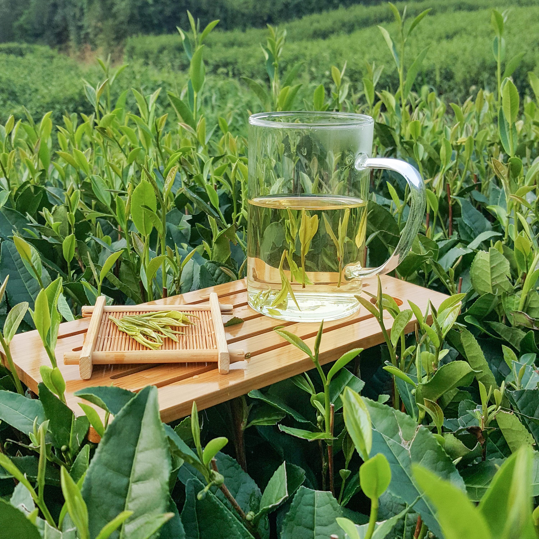 散装 250g 新茶叶正宗安吉白茶雨前一级绿茶高山手工原产地春茶 2018
