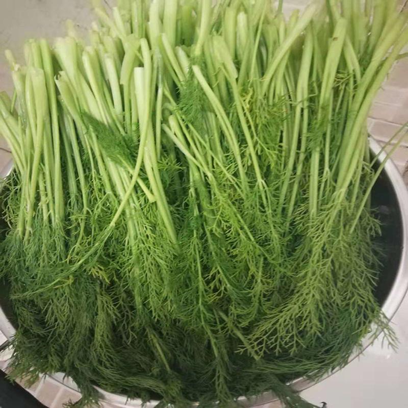 茴香菜 4斤带箱 新鲜蔬菜 小茴香菜 生鲜
