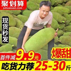 当季海南三亚菠萝蜜新鲜水果波罗蜜整箱特产20-40斤一整个包邮红