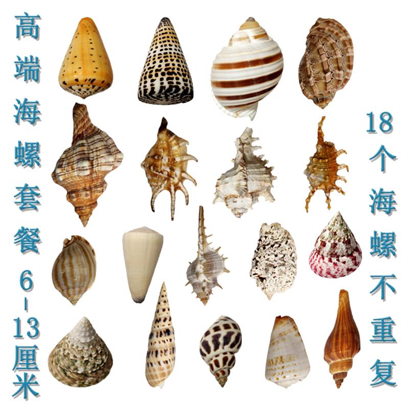 包邮可打孔海螺贝壳套餐鱼缸贝壳寄居蟹海螺壳拍摄道具地中海装饰
