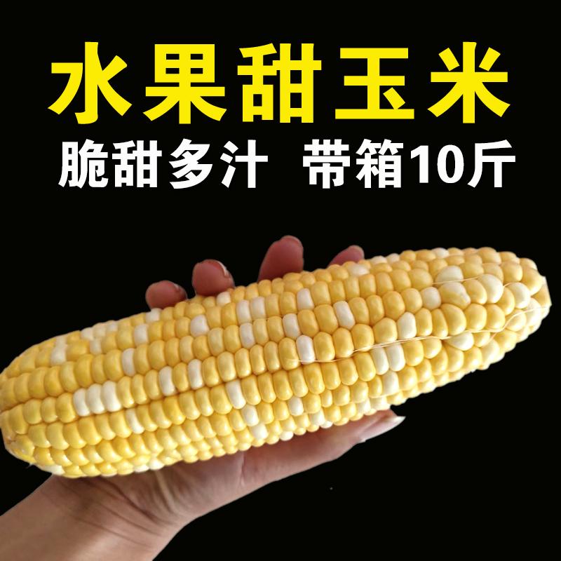 云南水果玉米新鲜带皮爆浆生吃香甜玉米棒即食农家嫩玉米9斤净重