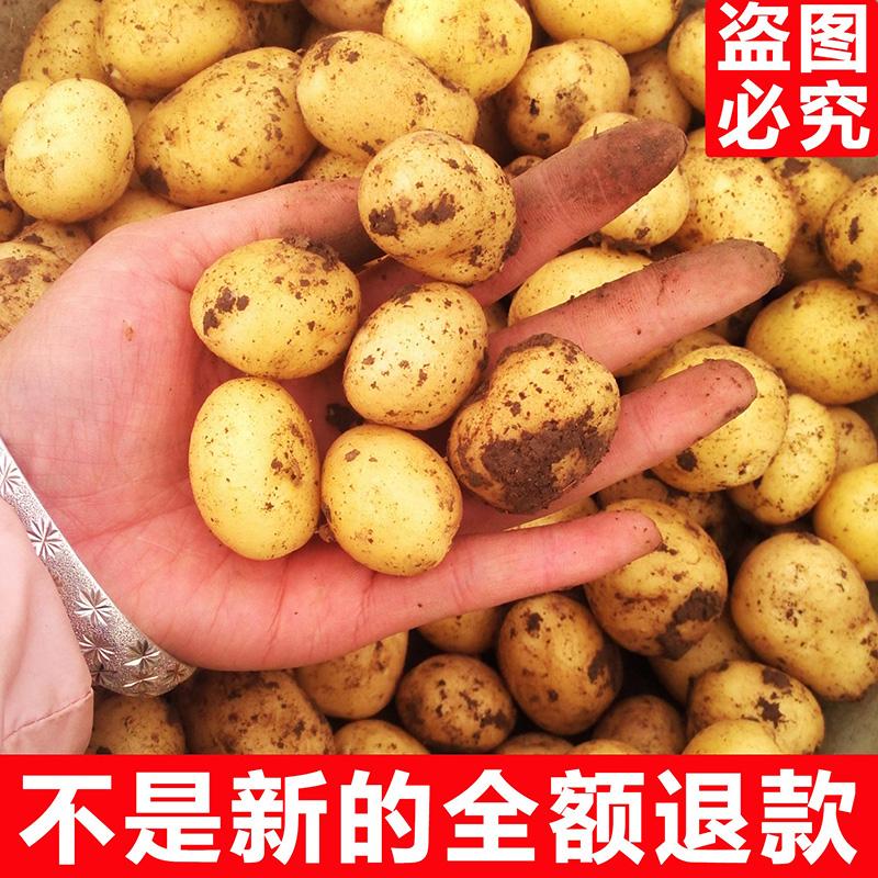 5斤新鲜土豆农家自种新鲜迷你小土豆新鲜蔬菜马铃薯