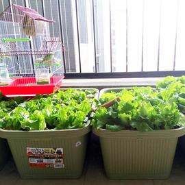 爱丽思阳台种菜盆长方形特大花盆蔬菜种植箱塑料树脂5/6/700花盆