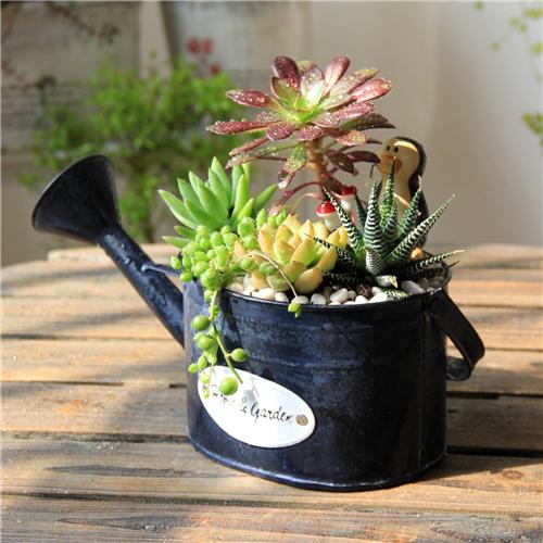 【尚尙】黑色鐵皮做舊澆花桶灑水壺造型花盆花器防水鐵桶田園裝飾