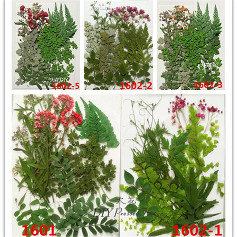葉片綠葉壓花押花乾花搭配款葉子 DIY材料包多款混合裝1601-1602
