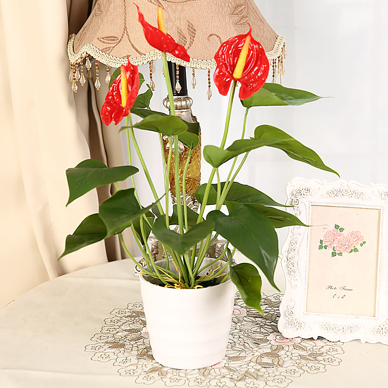 225 & Buy Simulation anthurium plants small matter of planting ...