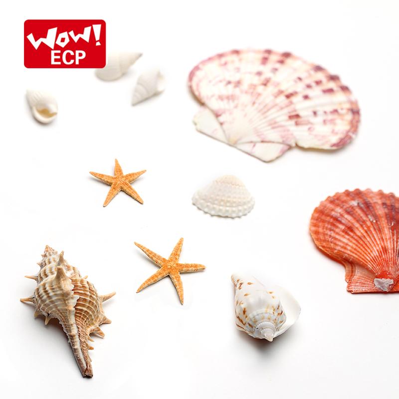 海洋套装 贝壳 摄影道具 摄影背景 摄影布景  摄影推荐 小九摄影