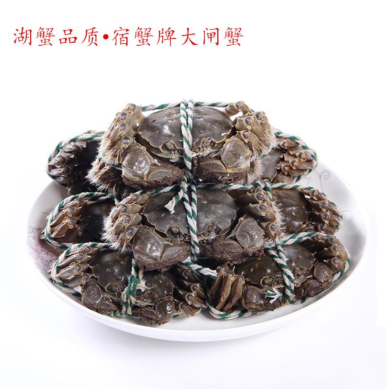 共10只全母大闸蟹六月黄1.8两鲜活螃蟹现货公母蟹红膏礼盒
