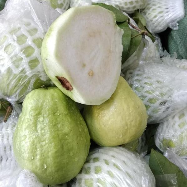 广西特产新鲜水果番石榴白心芭乐孕妇水果拔子喇叭鸡屎果5斤包邮