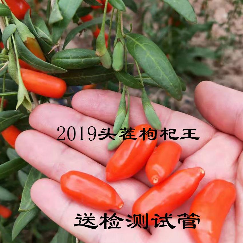 优惠清仓老品种宁夏近邻靖远头茬枸杞原生态种植特优级出