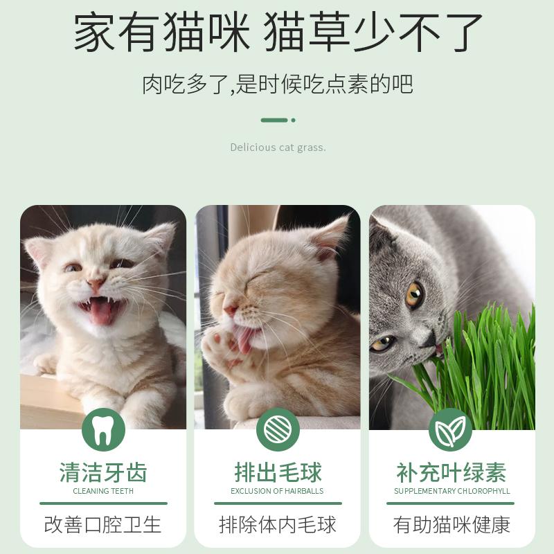 猫草种子水培盆栽猫薄荷猫零食化毛球种籽种植套装懒人猫
