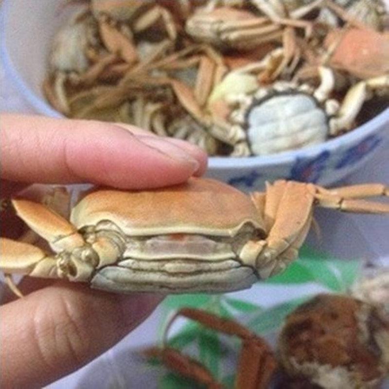 徽周100只装1.3元一只全母小螃蟹鲜活大闸蟹香辣蟹新鲜河蟹小闸蟹
