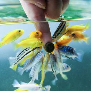 森森小型鱼贴片饲料热带鱼斗鱼鱼食孔雀红绿灯科通用型小型鱼鱼食