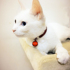 Pet Dogs Copper Bell Necklace Cat Bell Teddy Cat Cat Brand Bell Pendant Collar Jewelry Bell